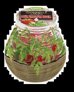 Bolsius Patiolight Gegeurd Tomatenblad